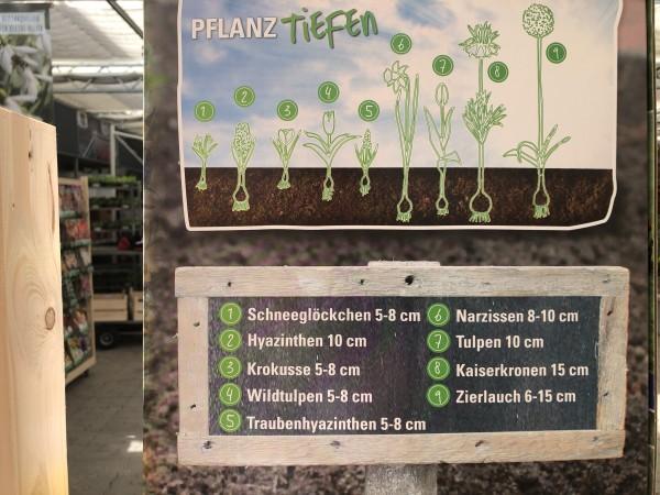 Pflanzhinweis