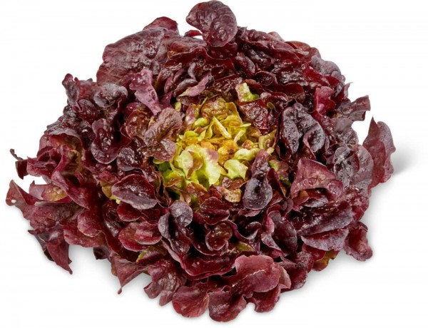 Eichblattsalat im 6´er Tray