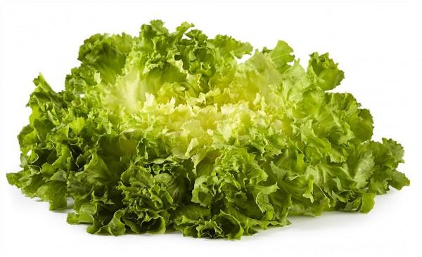 Endivien-Salat im 6´er Tray