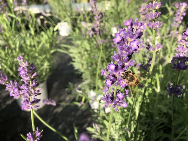 Insektenparadies