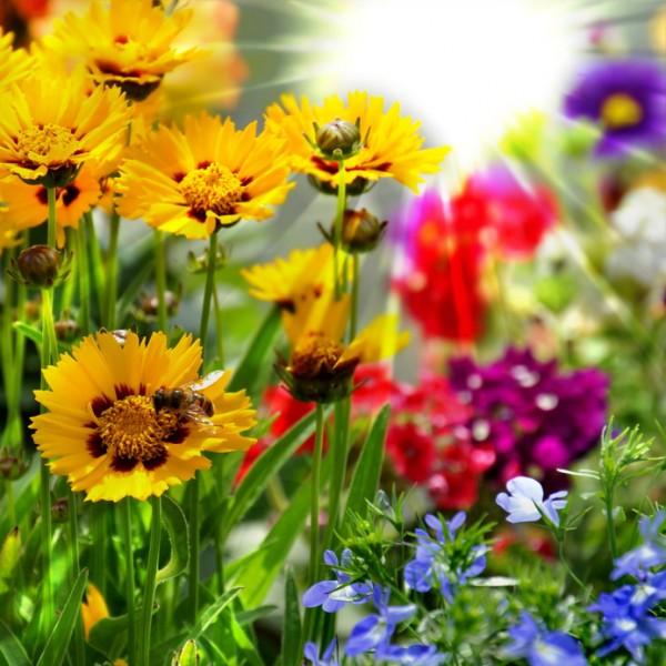 Jäger´s Volldünger - Blütentraum