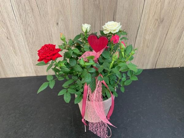 "Rose ""Love"""