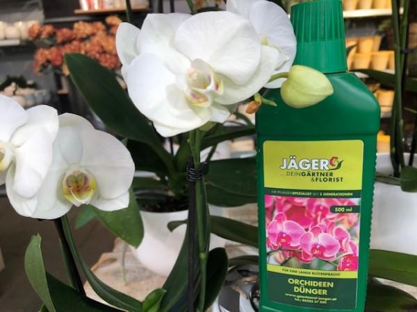 Jäger´s Orchideendünger, 500 ml