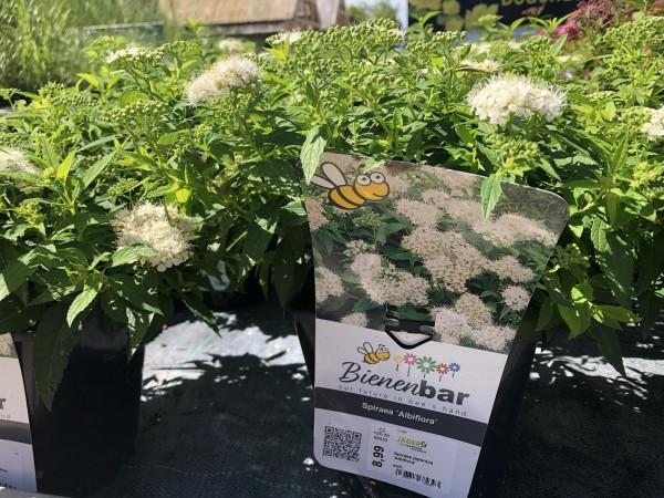 Bienenbar - Zwergspiere